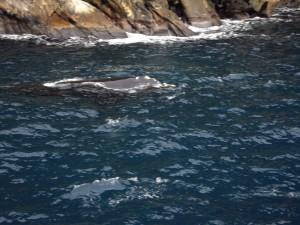 IMGP2694 whale2