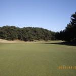 IMGP3535 No10 green