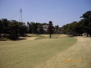IMGP4230 W-4 green